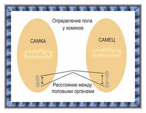 Определение пола Polhom