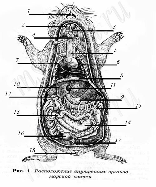 наши славные органы.
