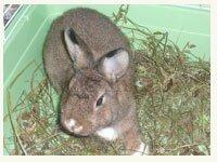 Понос у кроликов : причины, лечение и профилактика